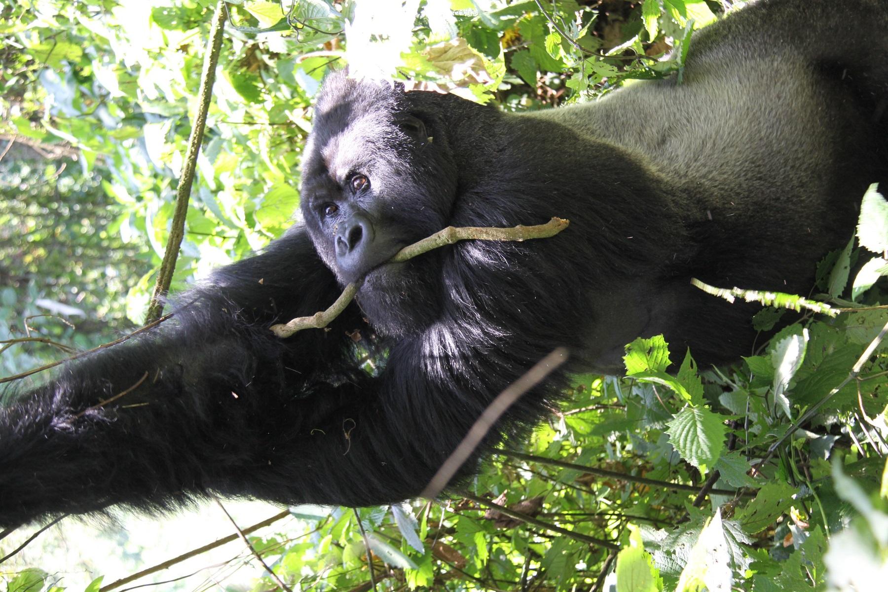 Best of uganda 1 - Best of Uganda Safari