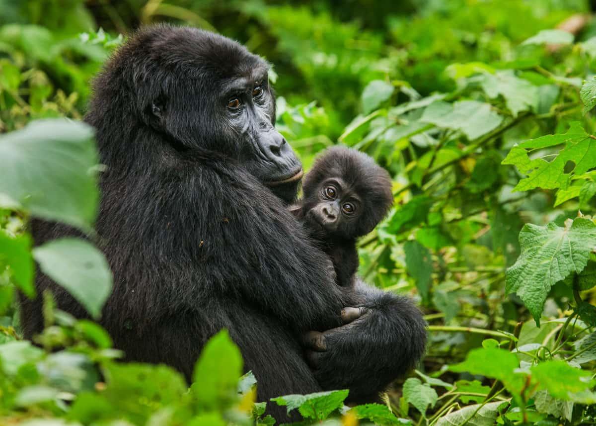 Best of uganda 2 - Best of Uganda Safari