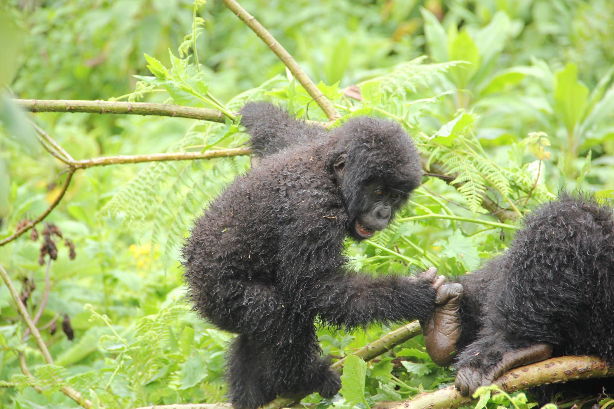 Best of uganda 3 - Best of Uganda Safari