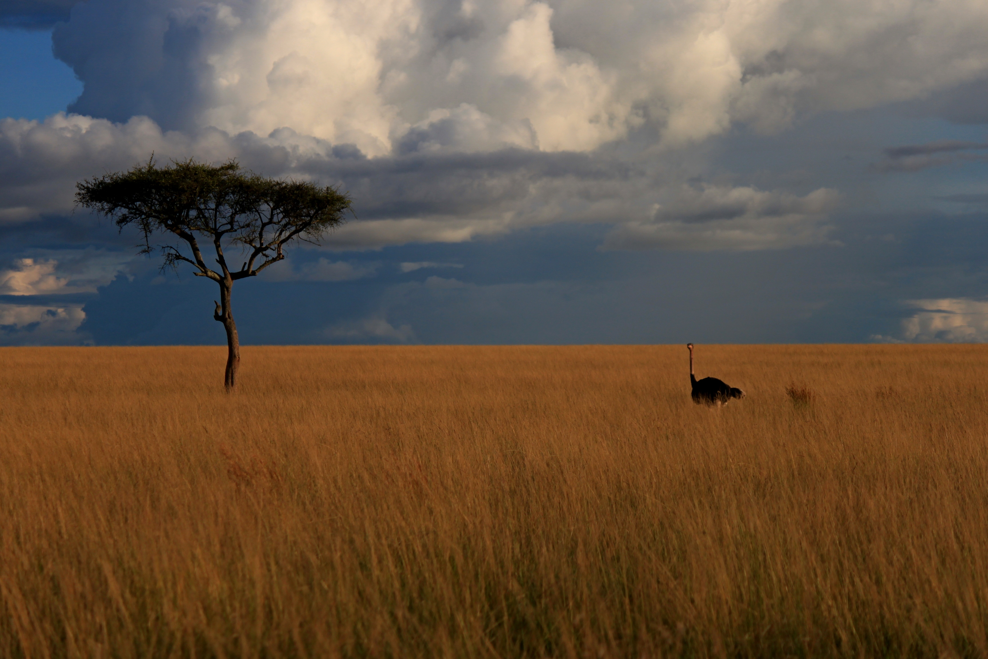 How Many Natural Parks In Africa