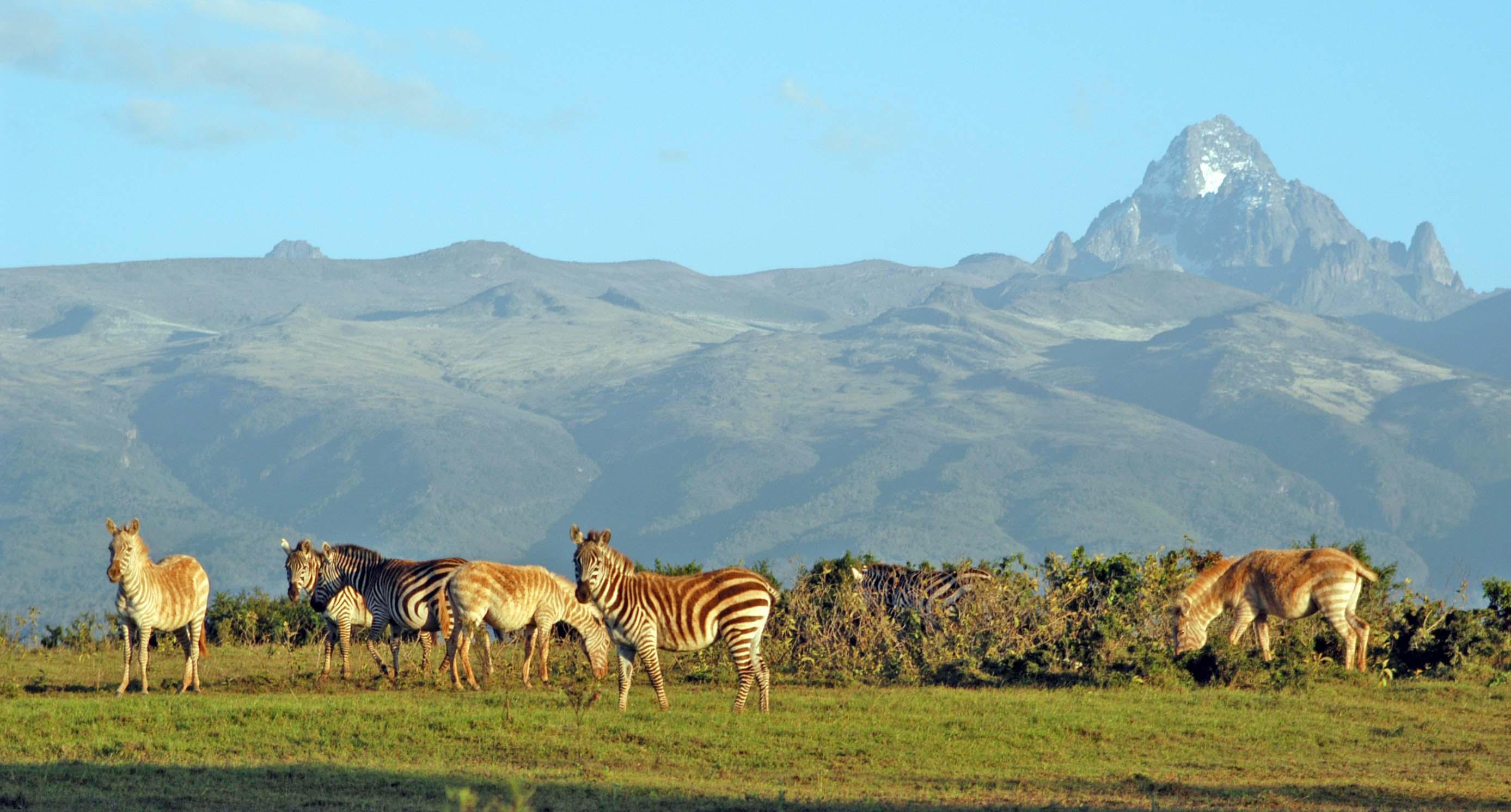 Image result for Mt.Kenya National Park