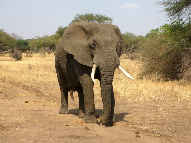 IMG 002 - 10 Facts About The Big Five