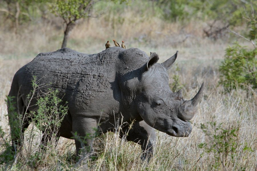 IMG 004 - 10 Facts About The Big Five