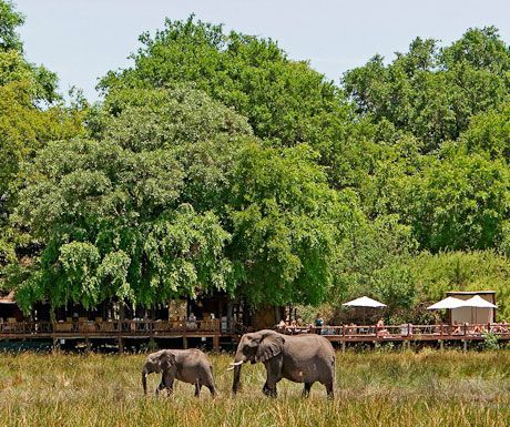 Chiefs Camp elephants.jpg.optimal - Top 10 safari camps for elephant viewing