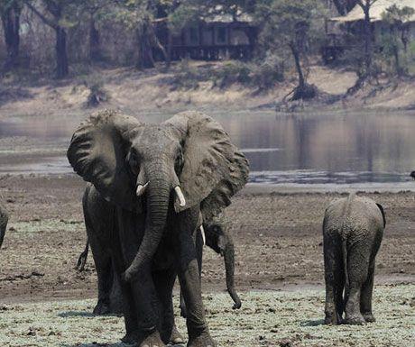 Chindeni Camp elephants.jpg.optimal - Top 10 safari camps for elephant viewing