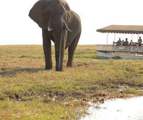 Savute Under Canvas elephants.jpg.optimal - Top 10 safari camps for elephant viewing