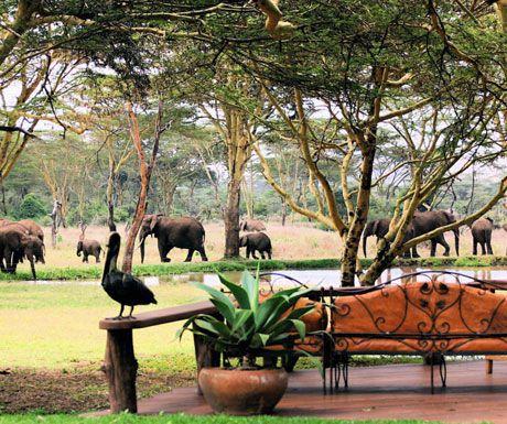 Sirikoi elephants.jpg.optimal - Top 10 safari camps for elephant viewing