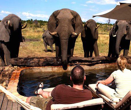 Somalisa elephants.jpg.optimal - Top 10 safari camps for elephant viewing