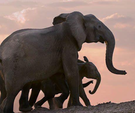 Tena Tena Camp elephants.jpg.optimal - Top 10 safari camps for elephant viewing