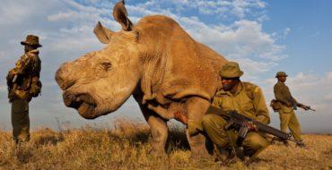 Silverbird Travel Safari Blog – African Safari tips, events